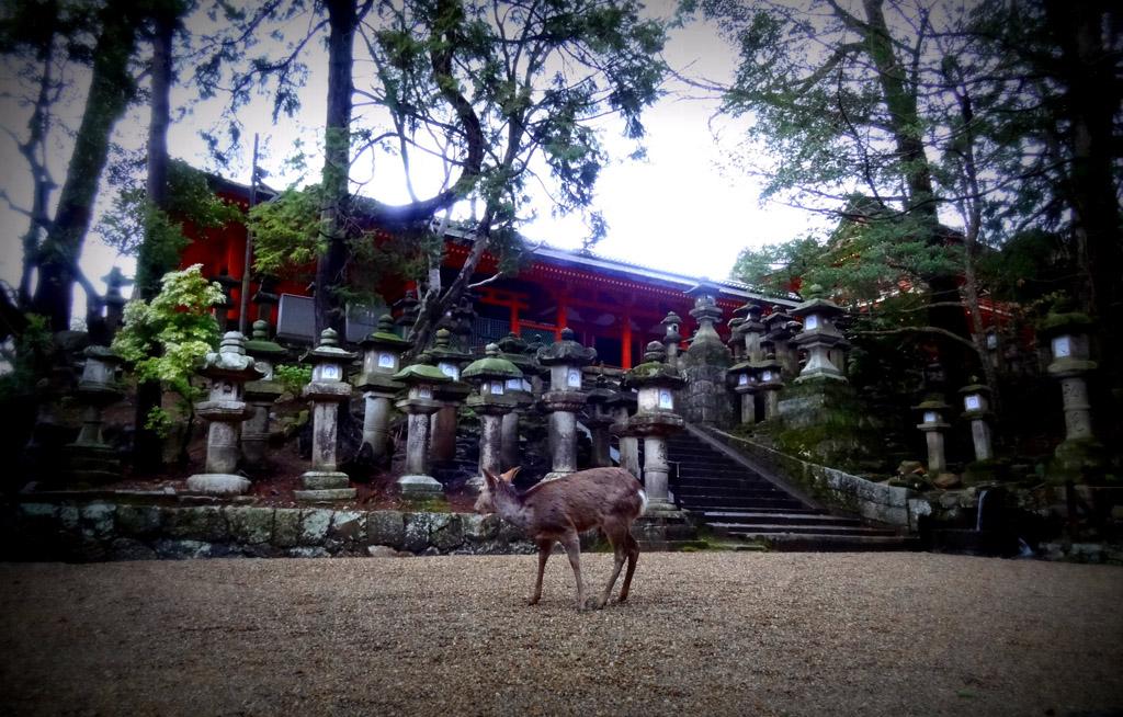 Nara en 2 jours: sanctuaire aux lanternes, Kasuga-taisha