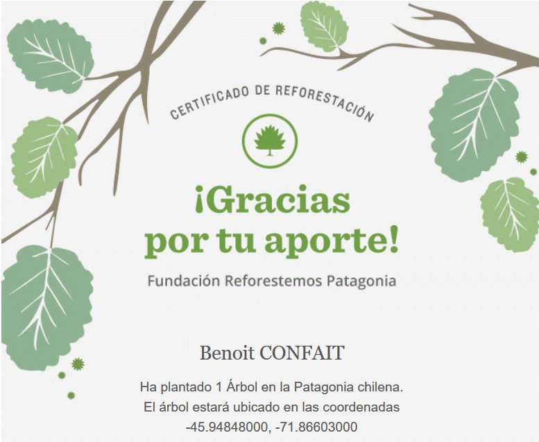 patagonia arbol